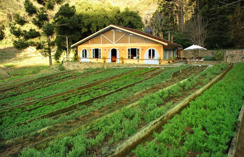 ervas de provence frescas